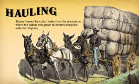 Cotton is King – Interactive